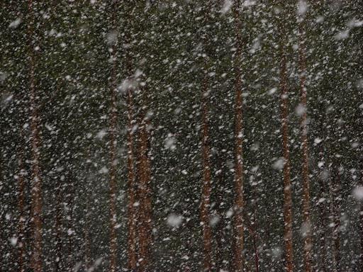 neige_1489.jpg