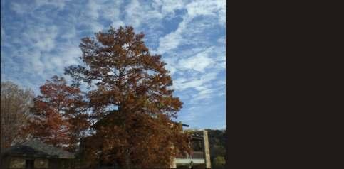 tree service arborist austin texas