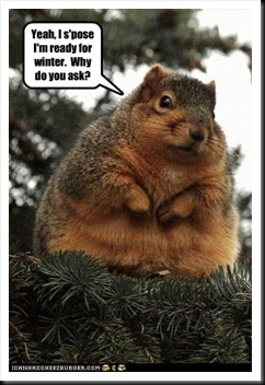 funny-pictures-squirrel-is-ready-for-winter
