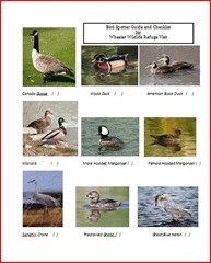 bird spotters guide