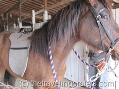 HORSES 057