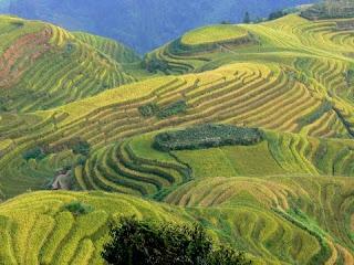 rizieres de Longsheng