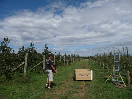 """Aquí hay una foto del """"bin"""", la escalerita y la bolsa donde pones las manzanas."""