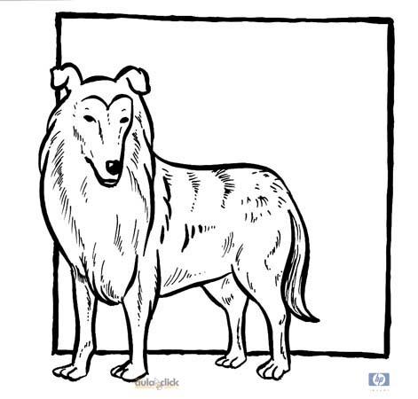 Dibujos Para Colorear De Perros Labradores Imagui