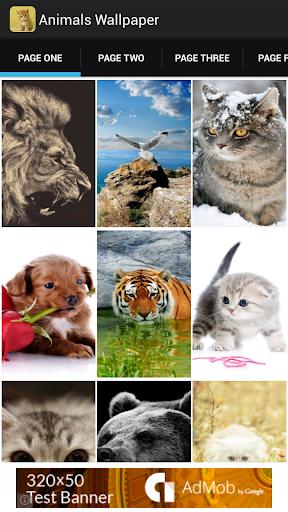 Animals Wallpaper