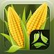 ScoutPro Corn