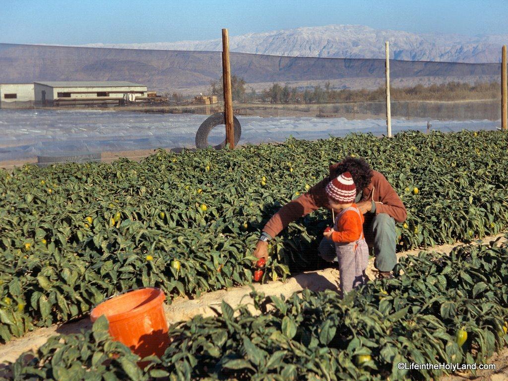 [Aravah, Neot Hakikar farms with child, db8004000209[4].jpg]