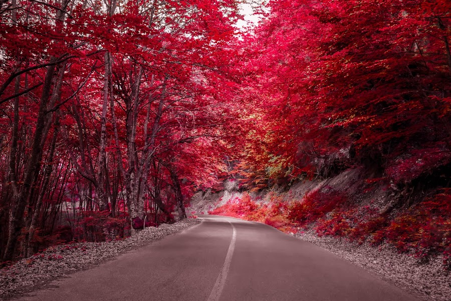 Automn the Red by Ρενος Κωστοπουλος - Landscapes Forests (  )