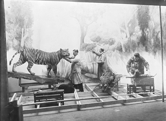 Exhibition Preparations at the American Museum of Natural History