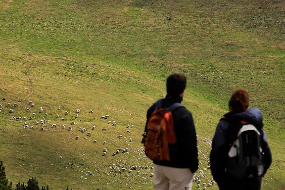 Ramats al coll del Remoló, muntanya i pastures de Nevà, Toses, Ripollès, Girona