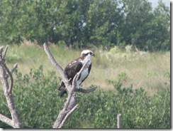 5784 Osprey South Padre Island Texas