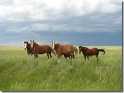 1098 Horses west of Hillsdale WY