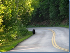 9436 Black Bear Going To The Sun Road GNP MT