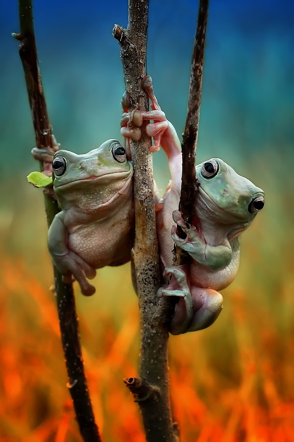 a true friend by Yusri Harisandi - Animals Amphibians