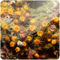 3D Corals (Pro) logo