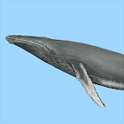 Dolphins & Whales Sightings icon