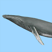 Dolphins & Whales Sightings