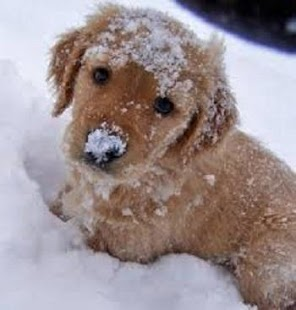 Cute Puppy Pictures - screenshot thumbnail