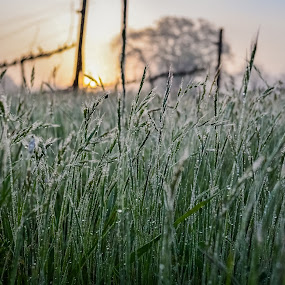 Morning Dew - View Through The Grass by Justin Murazzo - Nature Up Close Leaves & Grasses ( countryside, old, vineyard, santa rosa, yellow, march, nature, barn, tree, wine, forests, orange, earthly, grass, california, slusser, mood, tourism, relaxing, sunlight, sonoma, row, country, northern, dawn, winter, russian, county, trees, meditation, natural, golden, early, west, inspirational, explore, america, state, road, beauty, spring, sun, revive, vines, oak, emotions, united, jade, green, beautiful, scenic, morning, daybreak, blue, cloud, sunrise, scenery, the mood factory, renewal, river,  )