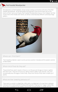Birdlife of North America Free Screenshot 5