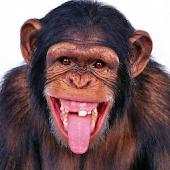 Monkeys Live Wallpaper