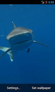 Shark Video Live Wallpaper