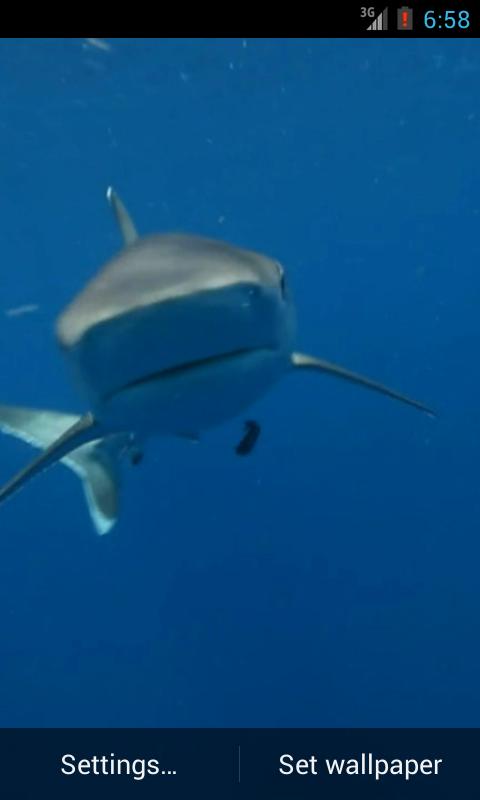 live shark wallpaper - photo #36