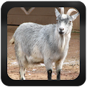 Goat Breeds: Types of Goat