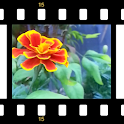 3D Garden Live Wallpaper icon