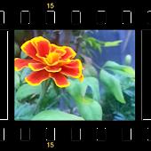3D Garden Live Wallpaper Free