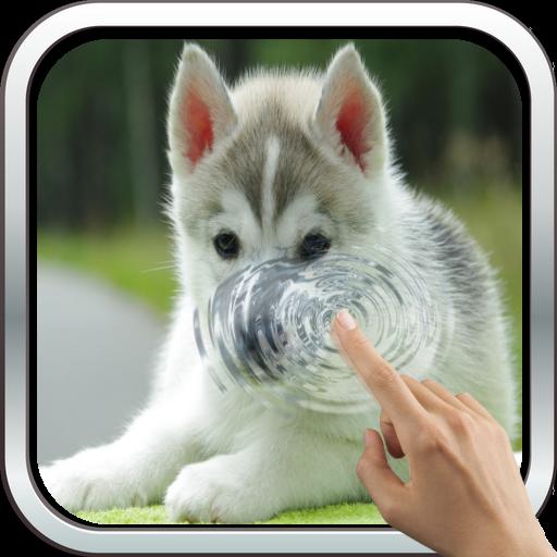 Little Husky 3D Wallpaper