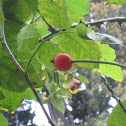 small berry .