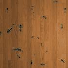 螞蟻獵人動態壁紙 icon