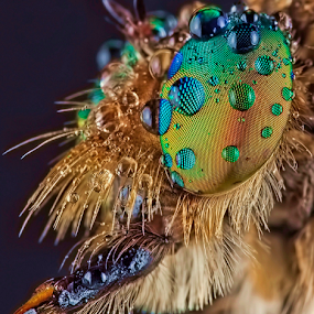 My Left Side Facet.. by Vincent Sinaga - Animals Insects & Spiders