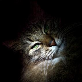 *** by Jurijs Ratanins - Animals - Cats Portraits ( mobilography, cat, pet, light, portrait )