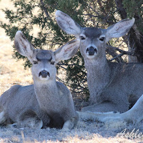 State Parks, NWR, WMA's of Texas