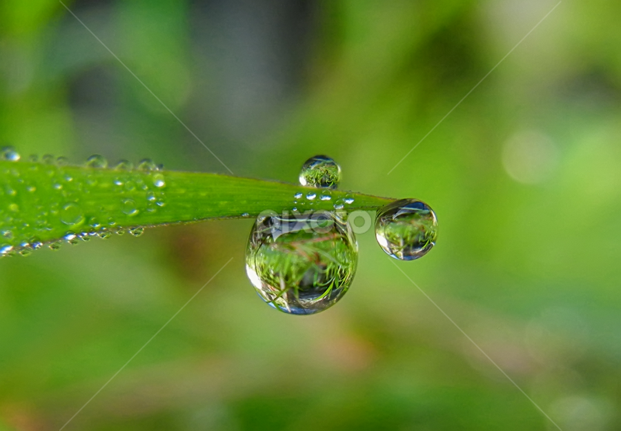 by Lalu Agus Suhardiman - Nature Up Close Natural Waterdrops