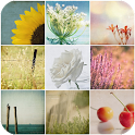 Photos, Wallpapers Collection icon