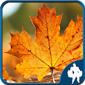 Leaf Jigsaw Puzzles 4 In 1 icon