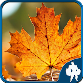 Leaf Jigsaw Puzzles 4 In 1