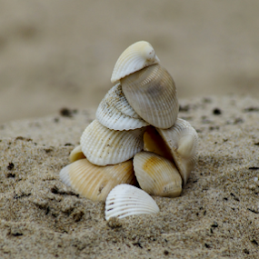 Pile O' Shells by Brian Stout - Landscapes Beaches