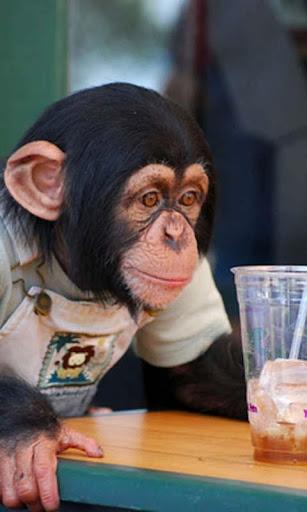 Talking Funny Monkey