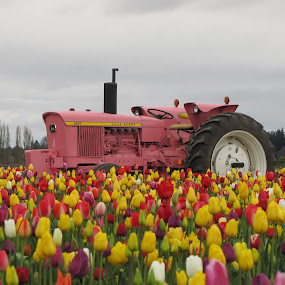 I see Pink in the field by Larry Peeler - Transportation Other ( field, nature, colorful, tulips, beauty, tractor,  )