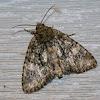 Spotted Phosphila Moth