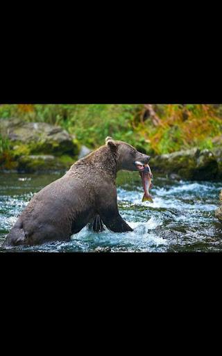 Animal Fishing Live Wallpaper