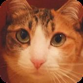 Lovely Cat Puz Vol.1