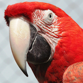Parrot HD Wallpaper