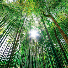 The Tallest Grass in the World by Justin Orr - Landscapes Forests ( bamboo, japan, grass, green, forest, wide-angle, landscape, sun,  )