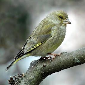 too cold by Anže Papler - Animals Birds