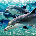 free sea logo